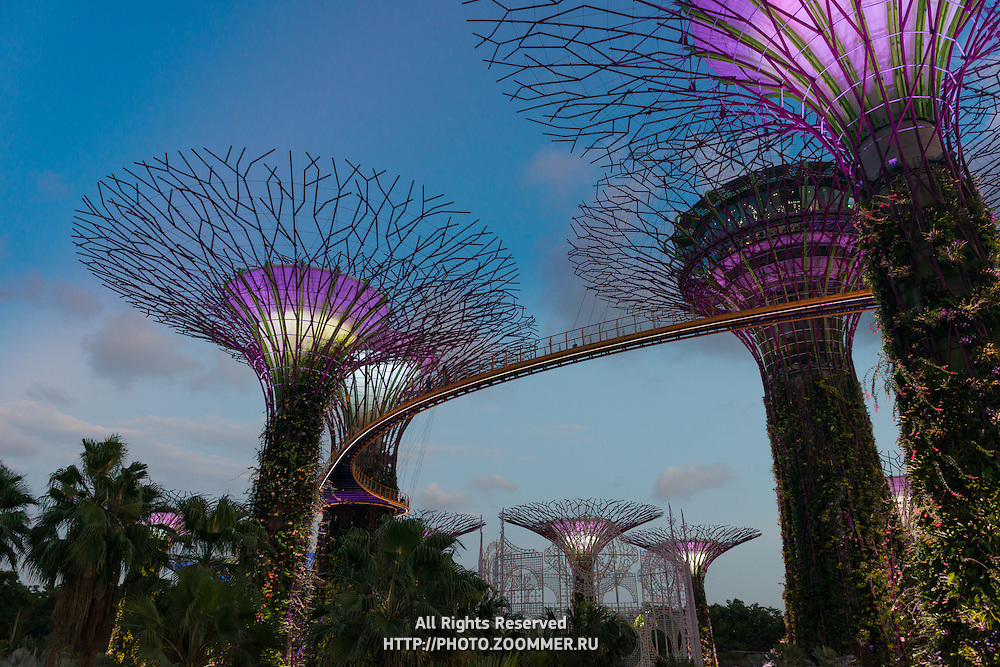 Supertrees show in the Gardens by the Bay, Singapore