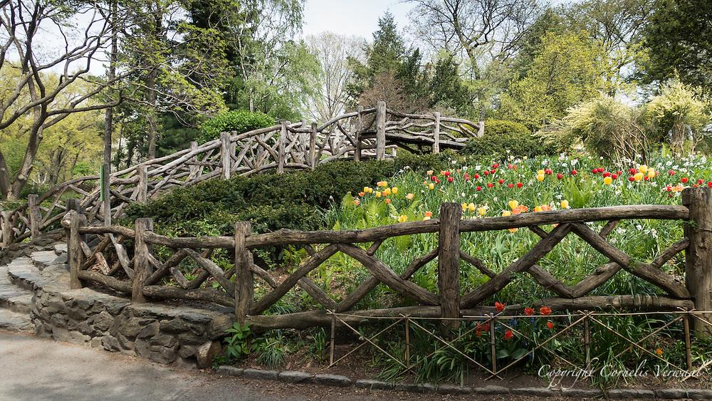 Shakespeare Garden in Central Park.