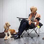 A dog and his owner are looking at each other during a dog show in Prague. #prag #praha #prague #czechrepublic #dog #show #expo #exhibition #animal #fair #hund #hundeimweltall #tschechien #latergram
