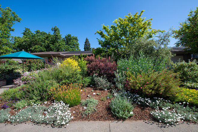 A home garden in the South Land Park area of Sacramento, California, features native plants such as a variety of salvias, during the Sacramento Valley Native Plant Garden Tour. Photo taken April 27, 2019.  Florence Low / California Department of Water Resources, FOR EDITORIAL USE ONLY
