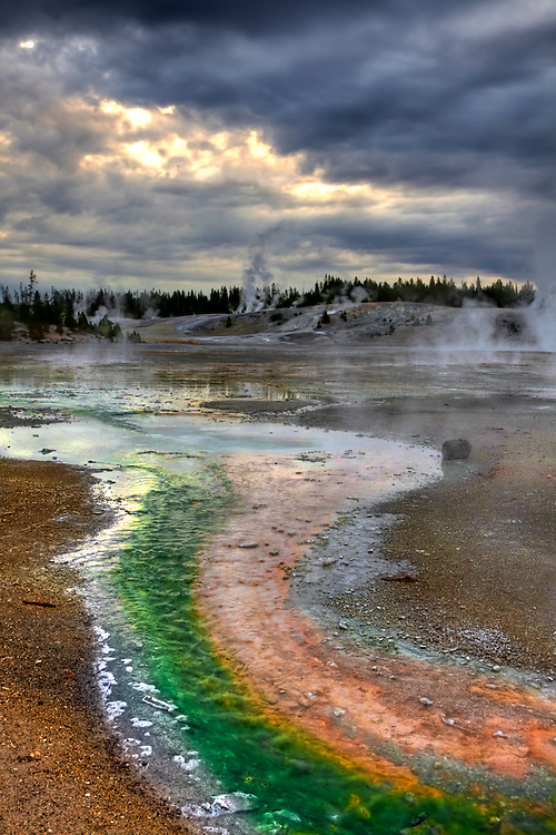 The Porcelain Basin area of Norris Geyser Basin abounds with geothermal activity and colorful bacterial mats in Yellowstone National Park, WY