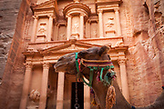 """Low angle view of the Treasury, a facade carved out of stone by the Nabataeans. Currently one of the """"Seven Wonders of the World"""" Camel in the foreground."""