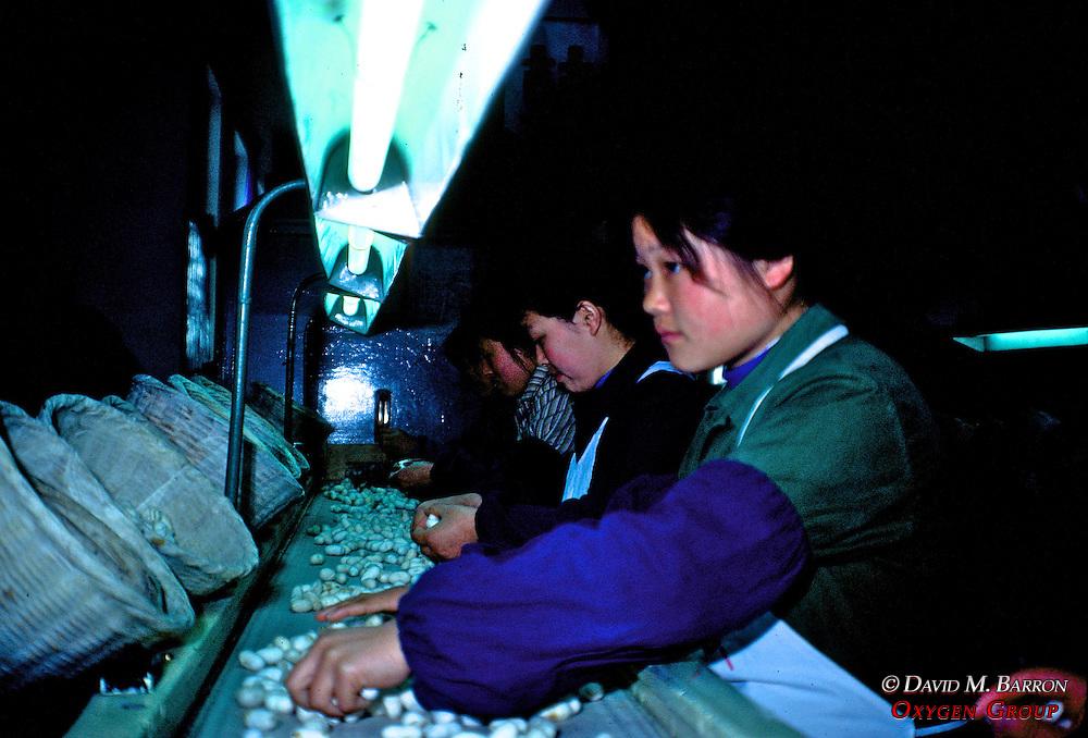 Workers in Silk Factory