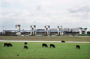 Nederland, Lith, 26-2-2020 De sluis en stuw bij Lith in de Maas. Het water stroomt vrij door de stuw omdat het hoog staat. Koeien staan in de wei .De waterstand in de Maas wordt in Nederland door de mens gereguleerd middels stuwen. Als er teveel aanvoer is staan deze open en kan het sneller wegstromen naar zee. Bij weinig aanvoer wordt het per vak op hoogte gehouden. Langs de Maas tussen Grave en Lith moeten nog belangrijke aanpassingen gedaan worden door Rijkswaterstaat om de rivier klaar te maken voor de toekomst . Foto: Flip Franssen