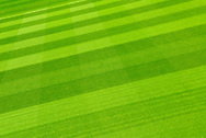 Stripe Cut Lawn - 2009