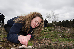 RSPB Assistant Warden Charlotte Bartlett attempting to lure a cricket out of its burrow, part of Field cricket Gryllus campestris translocation project, RSPB Farnham Heath Nature Reserve, Surrey, April