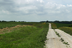 Midwestern scenic of crops growing in the fields creating a panoramic horizon with a gravel road slithering between the plots.