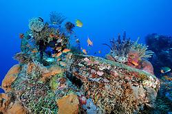 bunt bewachsenes Kuenstliches Riff aus alten Autoreifen, colorful Artificial reef made of old tires, Bali, Indonesien, Indopazifik, Jemeluk, Cemeluk, Amed, Bali, Indonesia Asien, Indo-Pacific Ocean, Asia
