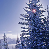 ALBERTA, CANADA. Snow covered conifer trees and Rocky Mountains viewed from Nakiska Ski Area in Kananaskis Country.