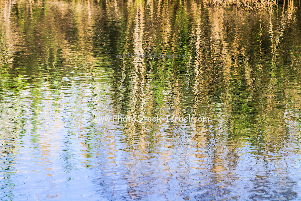 trees on the river bank reflect in the rippling water of the river