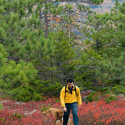Hiking on the Blueberry Mountain Trail in New Hampshire's White Mountains.  Benton, New Hampshire.  Pitch pine forest. (MR)