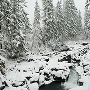 In the Cascade Mountains in Oregon, the Rogue River flows through the mountains and eventually to the Pacific Ocean.  Here the river pass through a narrow canyon with steep walls.  Fresh snow covers rocks and trees. Each year the Cascade Mountains receive a lot of snow.  Crater Lake which is not too far away averages 533 inches (44 feet) of snow a year.