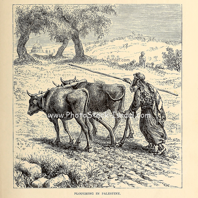 Ploughing the fields in Palestine From the book 'Those holy fields : Palestine, illustrated by pen and pencil' by Manning, Samuel, 1822-1881; Religious Tract Society (Great Britain) Published in 1873