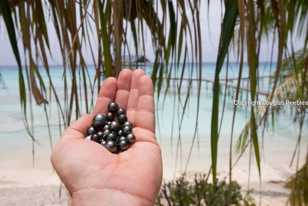 Black pearls, Fakarava, Tuamotu Islands, French Polynesia<br />