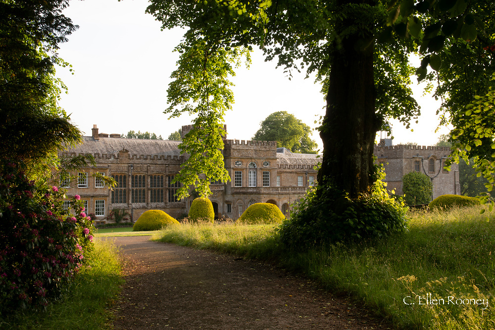A view through trees and grasses down a path leading to Forde Abbey, Chard, Dorset, UK