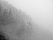 Stormy weather renders a grainy monochrome forest mountainside in the fog, WA, USA