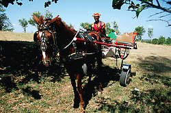 Man riding on a painted horse drawn buggy,
