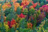 https://Duncan.co/fall-color-from-above-the-forest-canopy