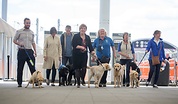 Lesley Hinds, (black jacket) Chair of Transport for Edinburgh helps trainee guide dogs who will travel on the trams for the first time to familiarise themselves with the service, at the Edinburgh Airport tram stop.