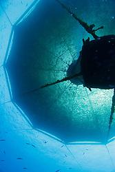 3,000-cubic-meter submersible fish pen installed in open ocean just off Kona Coast to raise Kona Kampachi, Hawaiian yellowtail, aka almaco jack or kahala, Seriola rivoliana, Kona Blue Water Farms, Big Island, Hawaii, USA, Pacific Ocean