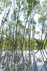 Flooded forest near Big Spring after Trinity River flood, Great Trinity Forest, Dallas, Texas, USA