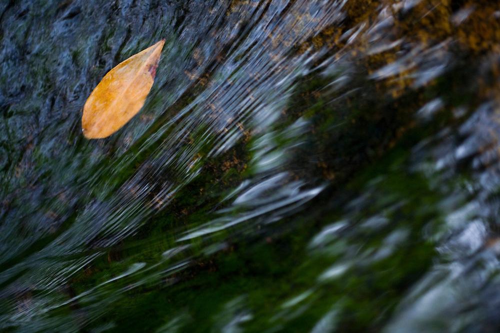 Santana do Riacho_MG, Brasil...Detalhe de uma folha na agua Alto Palacio no Parque Nacional da Serra do Cipo...Detail of a leaf on the water in Alto Palacio in theSerra do Cipo National Park...Foto: JOAO MARCOS ROSA / NITRO