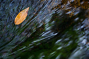 Santana do Riacho_MG, Brasil...Detalhe de uma folha na agua Alto Palacio no Parque Nacional da Serra do Cipo...Detail of a leaf on the water in Alto Palacio in theSerra do Cipo National Park...Foto: JOAO MARCOS ROSA / NITRO