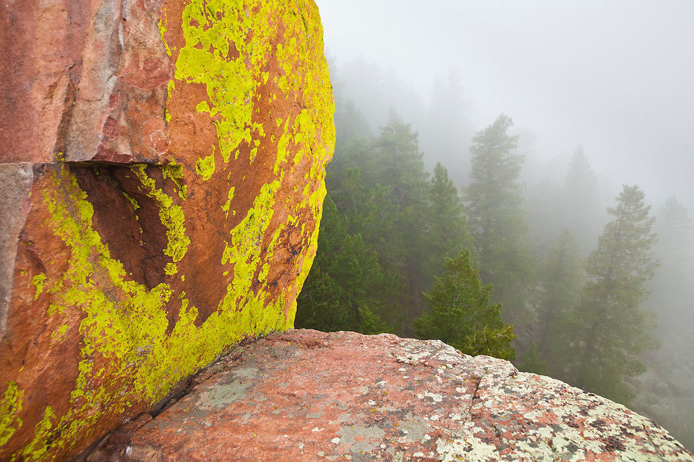 Colorful lichen and pine trees shrouded in fog seen from the First Flatiron above Boulder, Colorado.