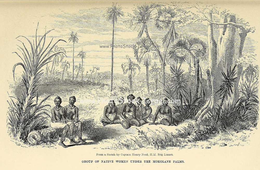 Group of native women under the Mokolane Palms [Hyphaene petersiana, the real fan palm or makalani palm] From book ' Missionary travels and researches in South Africa : including a sketch of sixteen years' residence in the interior of Africa, and a journey from the Cape of Good Hope to Loanda, on the west coast, thence across the continent, down the river Zambesi, to the eastern ocean ' by David Livingstone Published in London in 1857