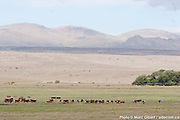 Photo documentaire Patagonie Photo Documentary /   /  / Argentina / 2008-12-26, Photo © Marc Gibert / adecom.ca