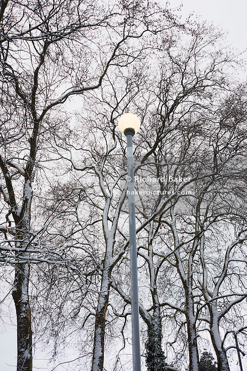Street sign among snow-covered trees during wintry snows in south London.