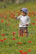 A two year old toddler in a field of spring flowers admires a flower