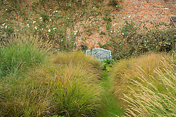 Looking along grass path lined with Stipa arundinacea towards blue bench