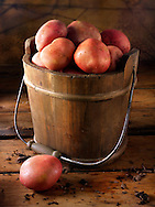 Red Rooster potatoes photos, pictures & images