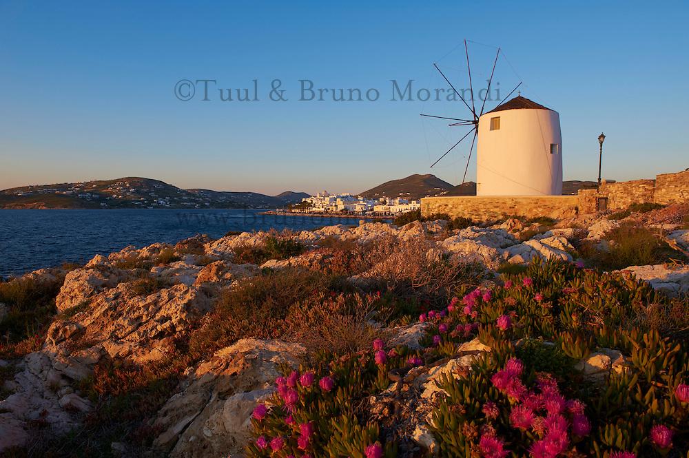 Grece, les Cyclades, Iles Egéennes,  Ile de Paros, Parikia (Hora), moulin près du port // Greece, Cyclades Islands, Paros Island, Parikia (Hora), windmill near the harbour