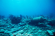 cannon and timbers from wrecked Spanish galleon, Chinchorros Banks, near Cozumel, Yucatan Peninsula, <br /> Mexico ( Caribbean Sea )