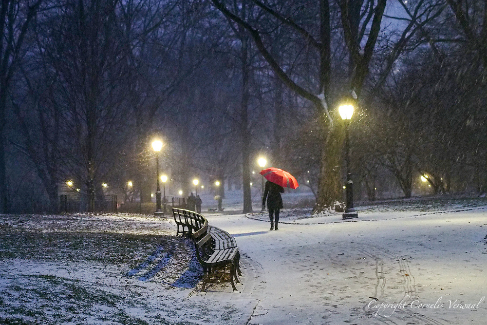 A large snow storm has begun; Central Park, late afternoon Dec. 16, 2020.