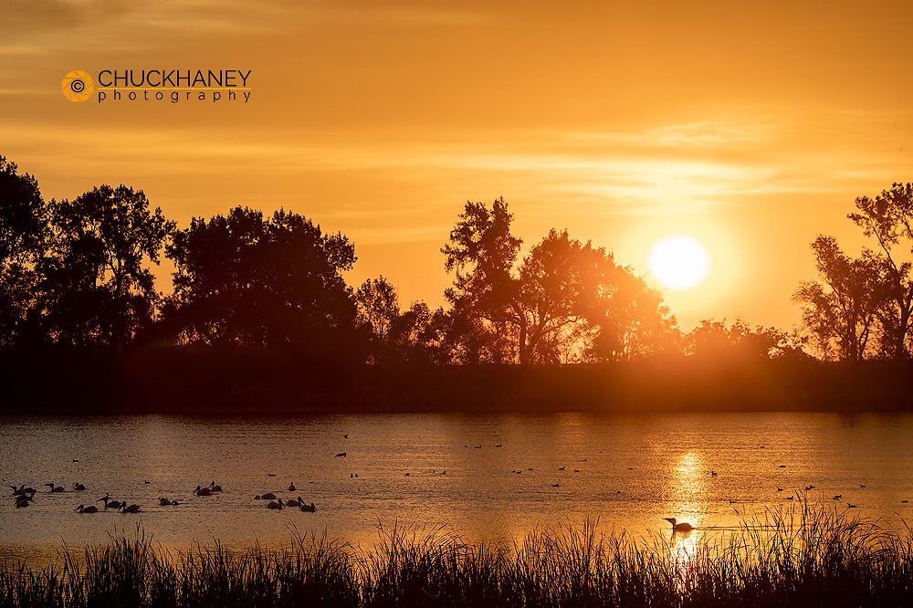 White Pelicans silhouetted against the rising sun in wetlands near Fort Ransom, North Dakota, USA