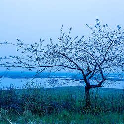 A tree on the edge of a salt marsh on a foggy morning in Rye, New Hampshire.