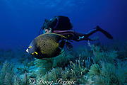 diver and  French angelfish, Pomacanthus paru, Molasses Reef, Florida Keys National Marine Sanctuary, Key Largo, Florida, ( Western Atlantic Ocean )  MR 79