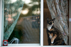Zelda the cat sits at the window and watches the action in the back yard of her Oakland, Calif. home, Monday, Aug. 24, 2020. (Photo by D. Ross Cameron)