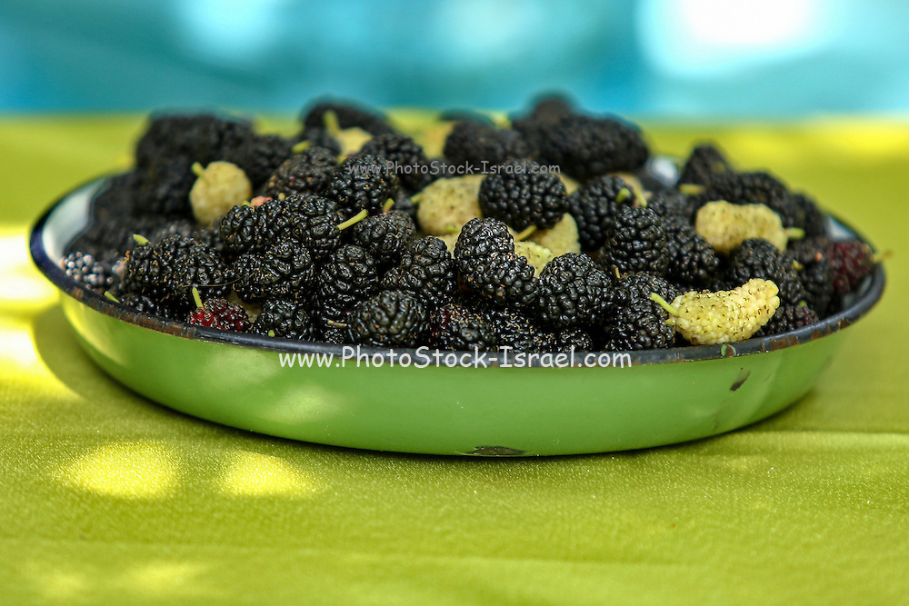 a bowl raspberries and mulberries fruit This image has a restriction for licensing in Israel