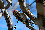 Wildlife photographs from Patagonia Lake State Park Arizona, USA