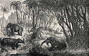 An ideal landscape of the Miocene period, with elephants rummaging through a forest. Wood engraving by Eduard Riou after Cazat.
