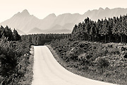 A brilliant white dust road leads out of the Tsitsikamma National Park forest and heads towards peak after knife edge peak of the mountain range beyond.<br />.<br />I can't get over how high, serrated and steep these mountain pinnacles actually are.