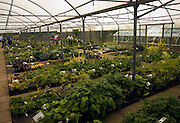 The Beth Chatto garden and nursery, Elmstead Market, Essex, England
