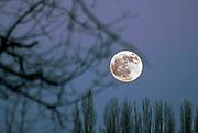 Nederland, Weurt, 11-1-2020  Zie de volle maan schijn door de bomen . Foto: Flip Franssen
