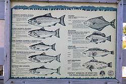 Fish Species Sign