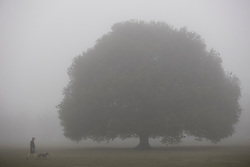 © Licensed to London News Pictures. 03/03/2021. London, UK. A man walks his dog in a foggy Greenwich Park in South East London. A yellow weather warning for fog is in place for parts of South East England . Photo credit: George Cracknell Wright/LNP