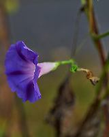 Morning Glory. Image taken with a Leica SL2 camera and 24-90 mm lens.